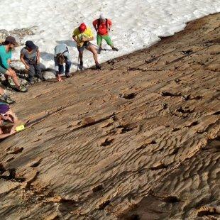 Sur les traces des ancêtres des dinosaures